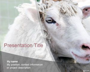 Sheep Modello di PowerPoint