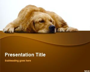 Golden Retriever PowerPoint Şablon