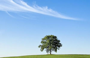 A Tree in a Meadow powerpoint template