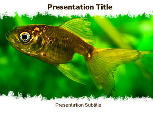 Animal - fish ppt template