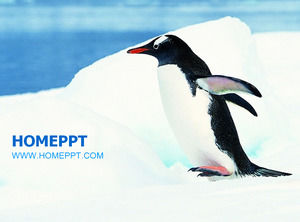 Antarctic penguin protection animal PPT template
