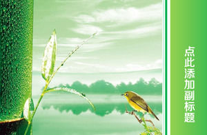 Bird and bamboo light green refresh ppt widescreen template