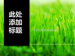 Black vertical title bud green grass PPT template