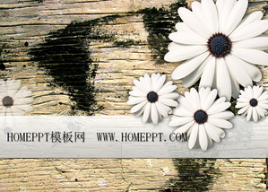 Chrysanthemum board background PPT template download