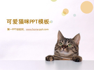 Template Slideshow Cute Cat Baixar