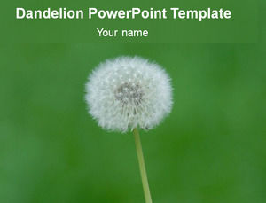 Dandelion pastel green background ppt template