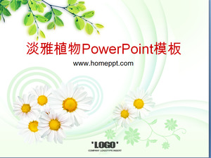 Elegante Chrysanthemum Tea Tree Sfondo pianta PowerPoint Template Scarica
