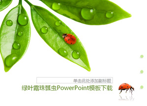 Fresh green leaves dewdrops Seven-day ladybug background PPT template