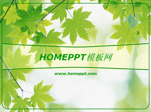 Green Maple Leaf Background PPT Template Download