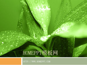 Green plant background PPT template download