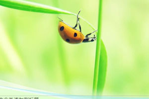 Ladybug PPT nature template on green leaf