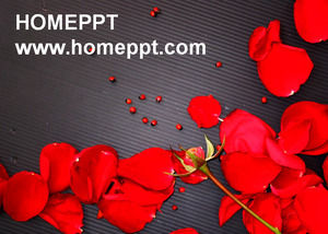 Love red rose PPT template download