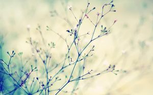 Messy beautiful cherry tree branch PPT background picture