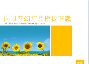 Sunflower background of the plant PowerPoint template download