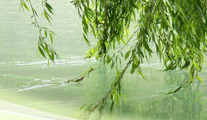 Weeping Willow Brushed Flowing Water - Spring Nature PPT template